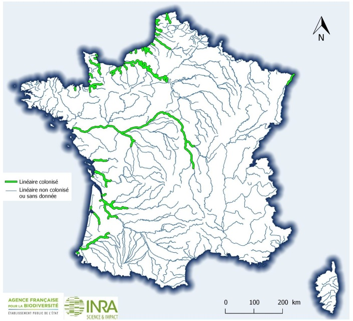 2018 AFB INRA Lineaire colonise LPF France